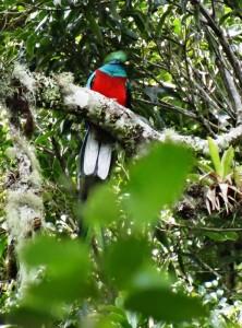 Quetzal 001