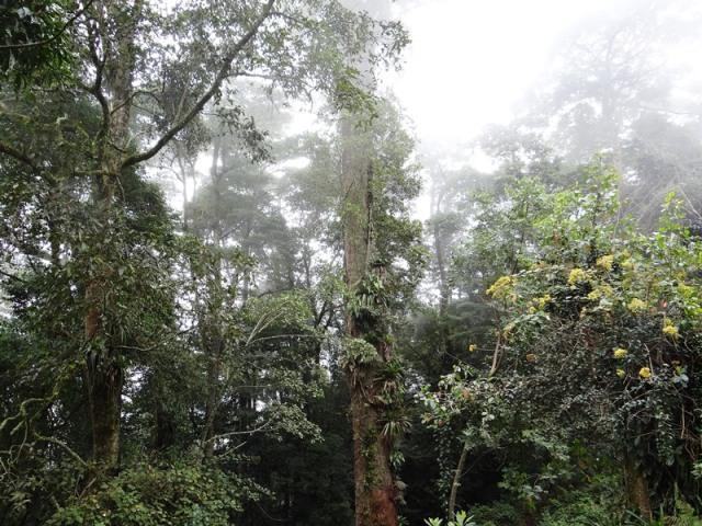Vista del bosque nublado